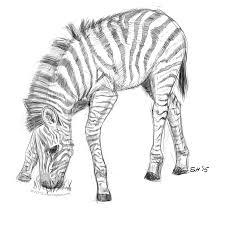 Sketches Animal Animal Sketches Stuart Hogton
