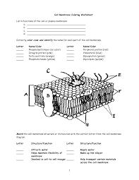 Cell Membrane Worksheet Google Search Cell Membrane