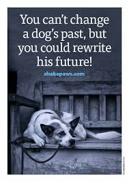 Rescue Dog Quotes Amazing You Can't Change A Dog's Past But You Could Rewrite His Future