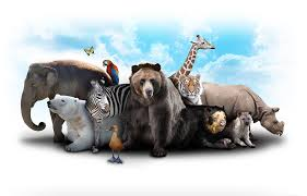 all animals in the world pictures. Unique The Intended All Animals In The World Pictures S