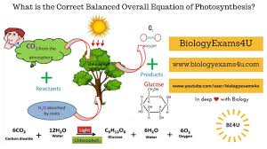 how we get the correct balanced overall equation of photosynthesis