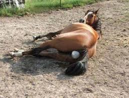 Роды кобыл лошадей подготовка выжеребка послеродовой период видео Выжеребка роды