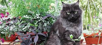14 herbs safe for cats and 9 to