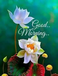 201 good morning flower images free