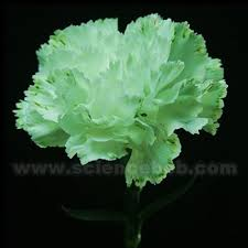 colored pictures of flowers. Exellent Pictures Color_flower_split Colored_flower_green In Colored Pictures Of Flowers A