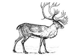Small Picture Caribou 5 Animals Printable coloring pages