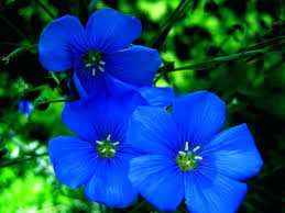 pictures of blue flowers types of blue flower names pictures blue flowers for wedding bouquets pictures of blue flowers