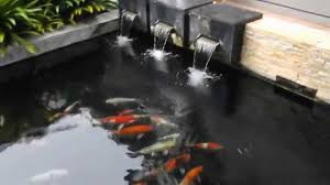 how to clean a koi pond. Simple Koi Throughout How To Clean A Koi Pond S