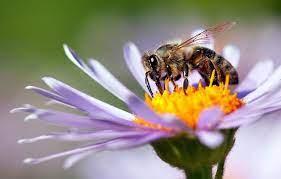 夢 占い 蜂 に 刺され た