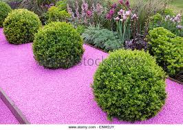 Small Picture Buxus Sempervirens Garden Uk Stock Photos Buxus Sempervirens