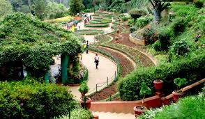 ooty is a haven of green and its government botanical gardens are some of the