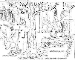 Small Picture Pictures Forest Coloring Pages 36 For Coloring Print with Forest