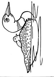 Disegno Anatra Da Coloraredisegno Oca Da Colorarepapera Da Colo