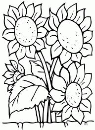 Ảnh đẹp: Tuyển tập tranh tô màu vườn hoa các loài hoa trong vườn của bé -  Thư Viện Ảnh