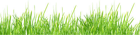 grass png. Simple Grass Grass Png Image Green Picture With Grass Png