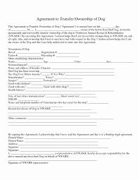 Transfer Agreement Transfer Agreement New Transfer Agreement Inter Panies Template 22