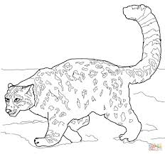 Crouching Snow Leopard Leopards Coloring Pages Free On Education