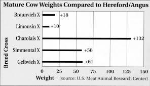 Angus Weight Chart Braunvieh