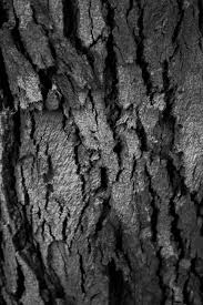 Week 2 Aaron Siskind Inspired Abstract Black And White