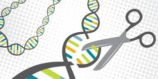 Genome Editing Genome Editing Archives Consumer Choice Center