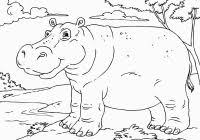 Free Printable Hippo Coloring Pages For Kids For Hippo Coloring