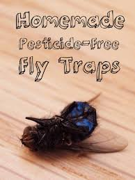3 genius foolproof fly traps to make at home