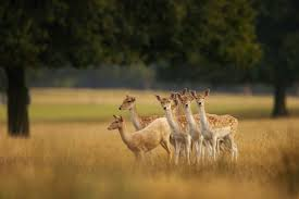 British Deer Species Id Guide And Facts Countryfile Com