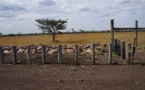 the gaps in the wooden posts allow every except for rhinos to p over or through the stone wall presents an optical illusion for rhinos