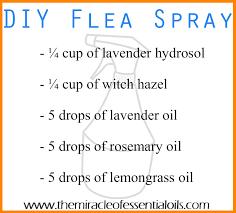 diy essential oil flea spray