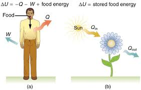 first law of thermodynamics part a of the figure is a pictorial representation of metabolism in a human
