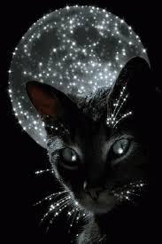 """Résultat de recherche d'images pour """"gif pinterest de chat"""""""