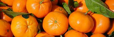 Картинки по запросу мандарины гибриды
