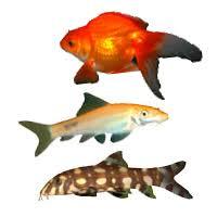Карпы-кои и <b>золотые рыбки</b>: оранды, риукины, кометы ...