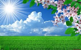 Αποτέλεσμα εικόνας για εικονες για φοντο με λουλουδια
