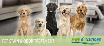 pet stains odor care cleaning