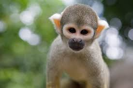 real jungle animals. Contemporary Jungle Real Jungle Animals  Google Search To Real Jungle Animals S