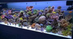 fish tank lighting ideas. Reef Tank LED, PUR Vs PAR In Aquarium Lighting Fish Ideas