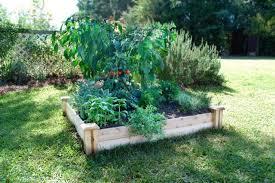 beginner vegetable garden.  Vegetable Organic Gardening For Beginners Raised Bed Vegetable Garden For Beginner Vegetable Garden B