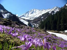 spring in the mountains - Spring Photo (31493836) - Fanpop
