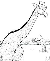 Giraffe Coloring Pages Printable Baby Giraffe Coloring Pages Giraffe