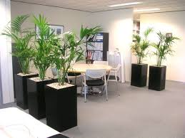 office flower pots. Use Individual Pots With Large Plants To Make A Partition. Nice Effect! See. PlantsOffice PlantsFlower Office Flower U