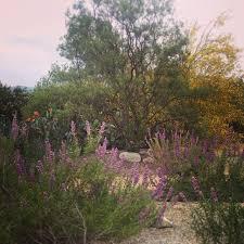 cultivar garden at rancho santa ana botanic garden in claremont ca