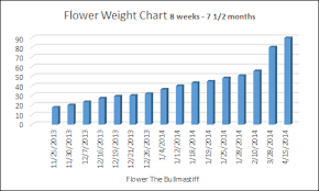 Bullmastiff Size Chart Diet And Nutrition Flower The Bullmastiff