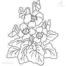 Las Plantas Coloring Pages