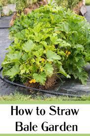 how to straw bale garden