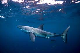 Shark Week 2021 Schedule, Line-Up and ...
