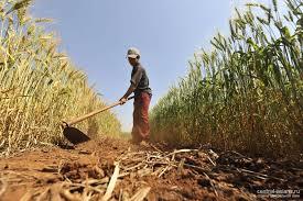 земельных ресурсов и способы их решения Проблемы земельных ресурсов и способы их решения
