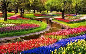 نتیجه تصویری برای عکس گل و باغچه