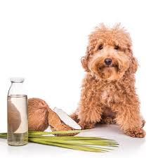 is coconut oil safe for dogs