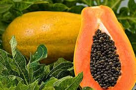 What are the health benefits of papaya seeds - Simplicity
